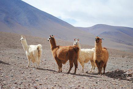Bolivie - Désert - Uyuni