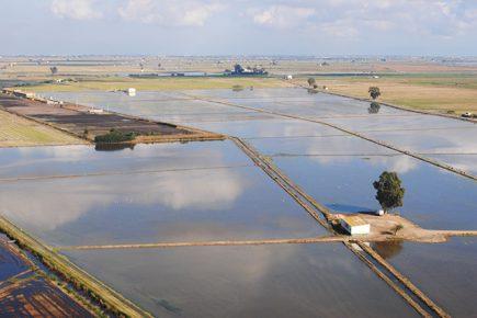 Catalogne - Les rizières du Delta de l'Ebre