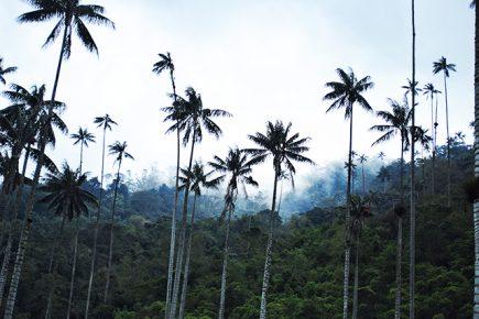 Colombie - Salento - Cocora